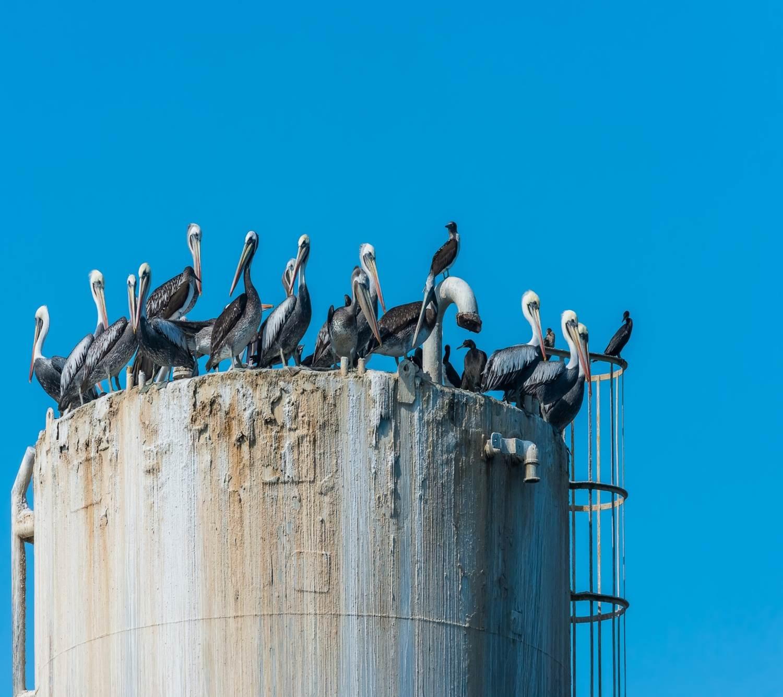Petrol ve Gaz Endüstrisinde Güvenlik
